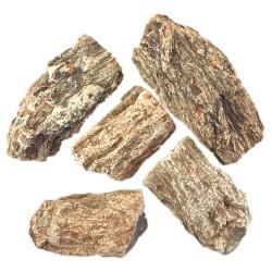Bois Fossile Brut